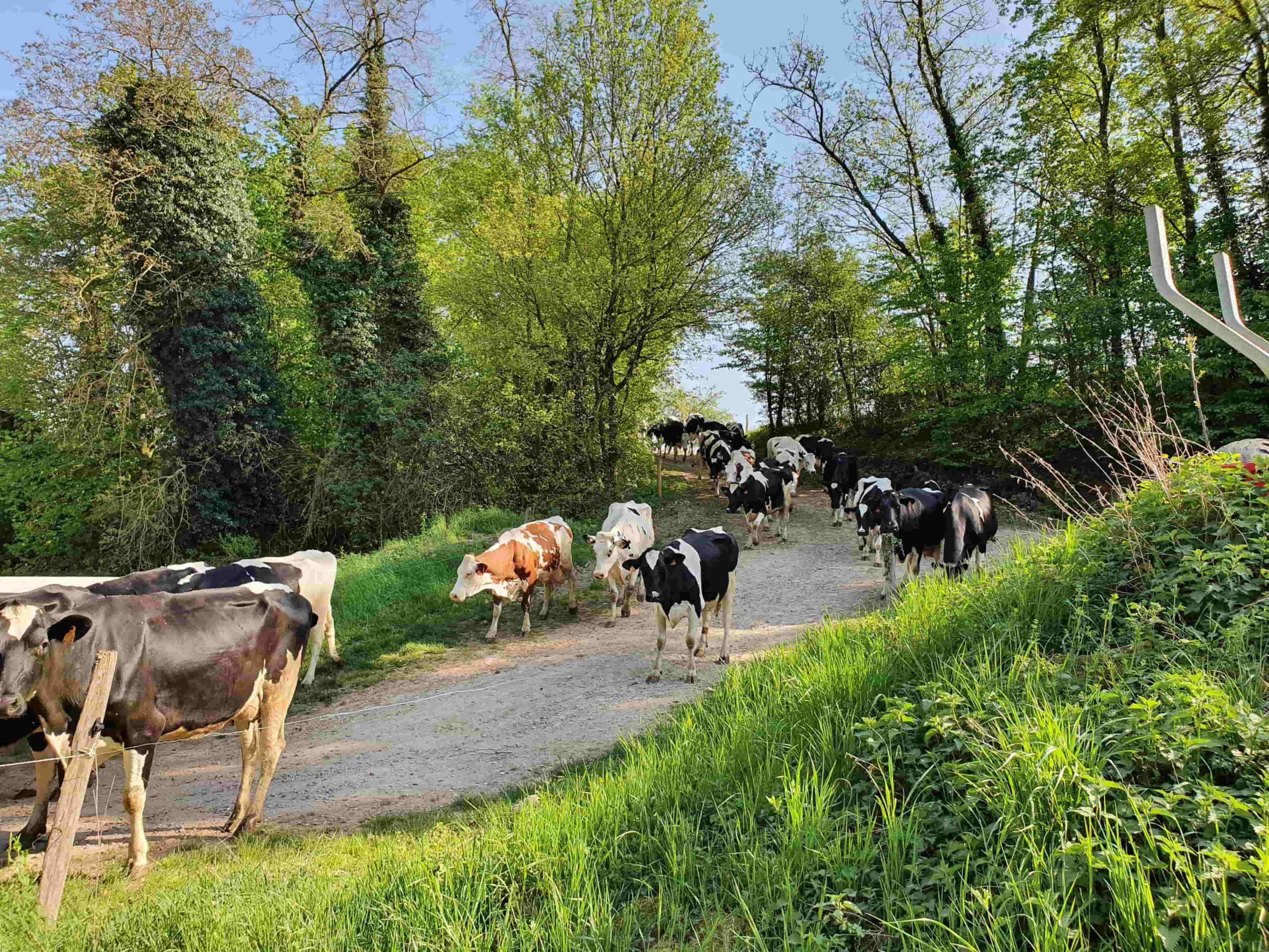 Ferme Motsch Gollentz laitières Yaourts de Sandrine (68) Osenbach